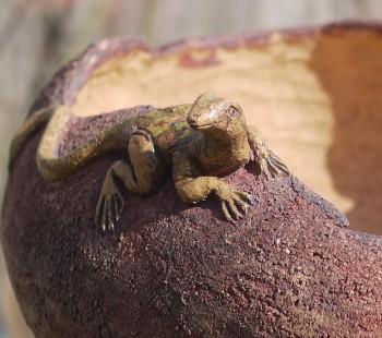 Keramický, zahradní květník s ještěrkou