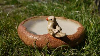 keramické pítko pro ptáčky ptáček lucie polanská 3